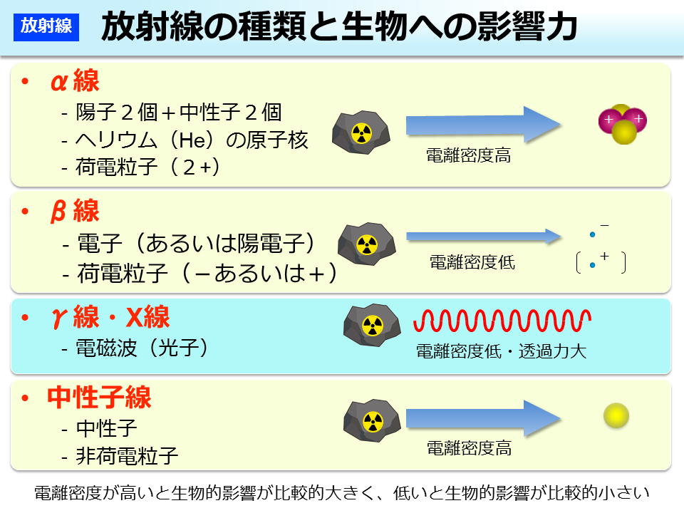 環境省_放射線の種類と生物への影響力