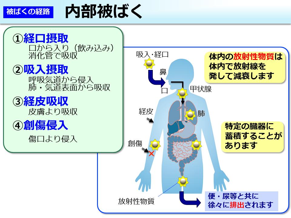 放射線による健康影響等に関する統一的な基礎資料(平成28年度版、 HTML形式)