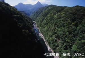 Evergreen broadleaf forests, view from Matsumine-Ohashi bridge