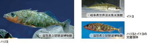 https://www.env.go.jp/nature/yasei/ex-situ/img/instance/001.jpg