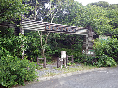 photo of Amami Nature Observation Forest