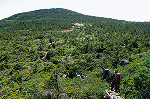 photo of Subalpine Coniferous Forest of Mt. Nishi-Azuma
