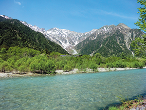 photo of A Riparian Forest of Salix arbutifolia in Kamikochi