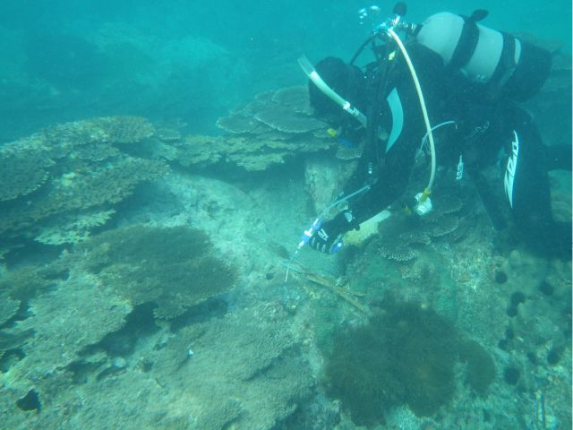 photo of Crown-of-thorns Starfish Removal Work