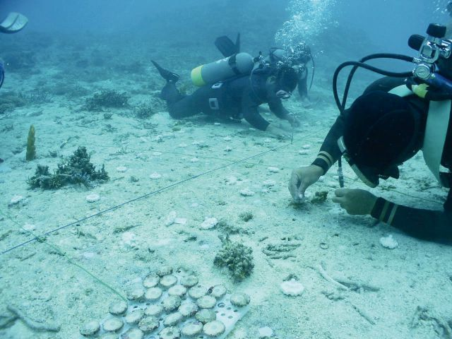 photo of Implanting Coral Settlement Devices to the Seabed.