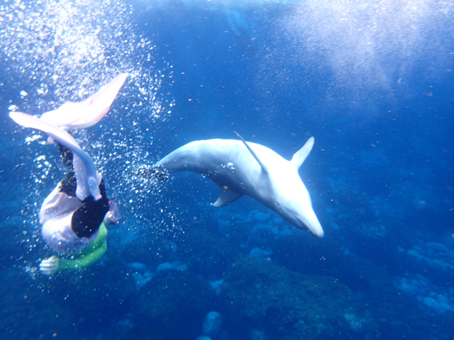 photo of Swimming with Dolphins