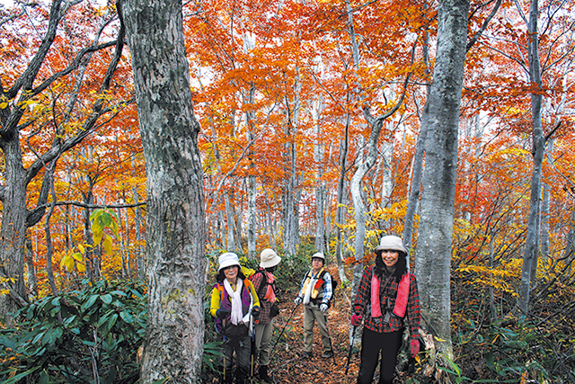 photo of Japanese Beech Forest