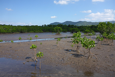 photo 4 of Iriomote-Ishigaki National Park