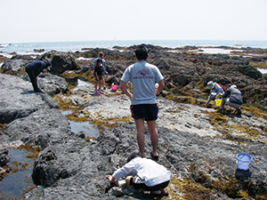photo of Observing Marine Life in a Tide Pool