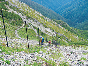 photo of Deer Fence Installed in Mt. Warusawa