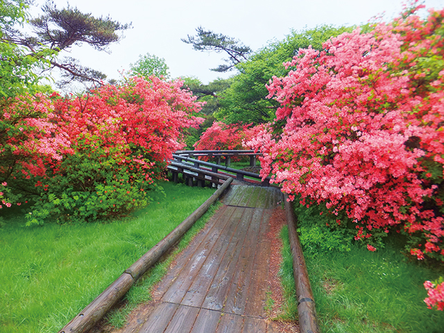 photo of Nasu Nature Study Paths
