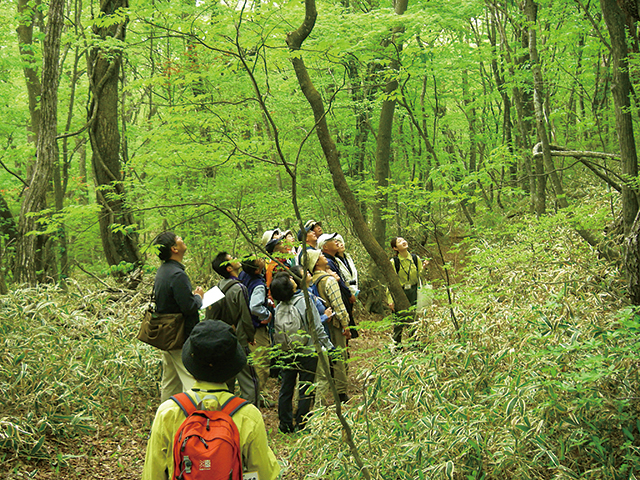 photo of Nasu Heisei-no-mori Forest