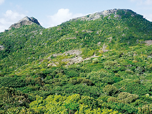 photo of Dry Scrub Forest (Anijima Island)