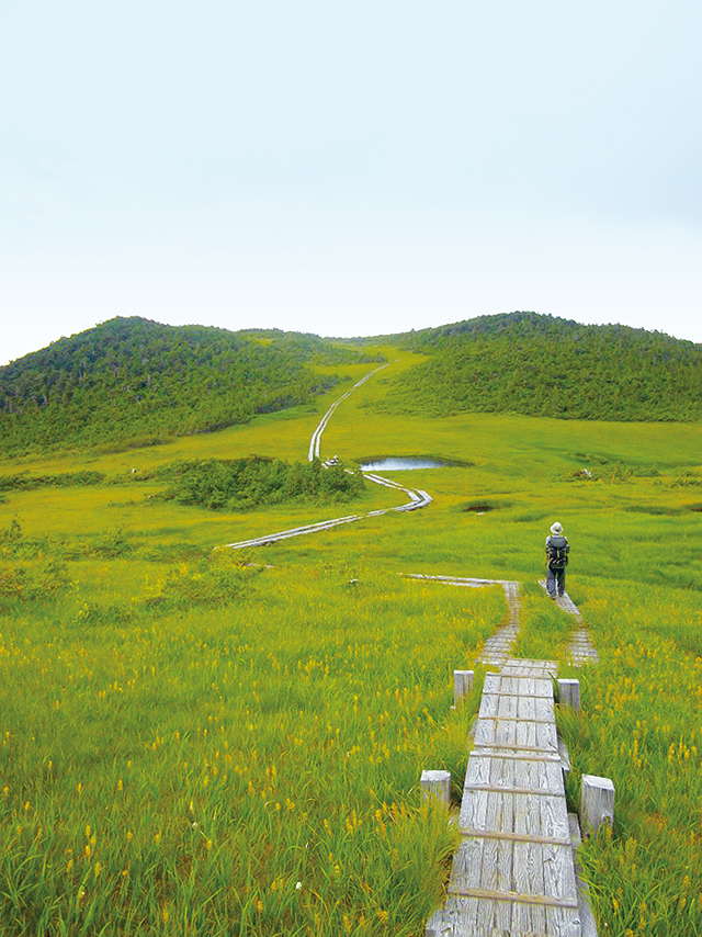photo of Kumazawa-Tashiro Marsh (August)