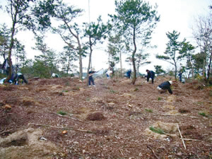 photo of  Conservation and Restoration of Pine Trees