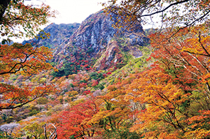 photo of Autumn-colored Forest around Mt.Fugen