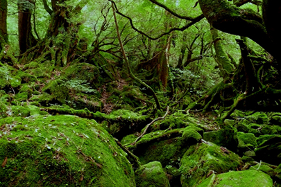 photo 3 of Yakushima (Island) National Park