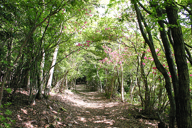 photo of Kinki Nature Trail (Nagaizaka)
