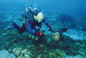 photo of Extermination of Crown-of-thorns Starfish (Copyright by Kushimoto Marine Park Center)